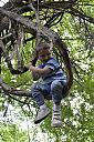 ethan sitting in tree 3 smaller by RookieDSLR in Member Albums