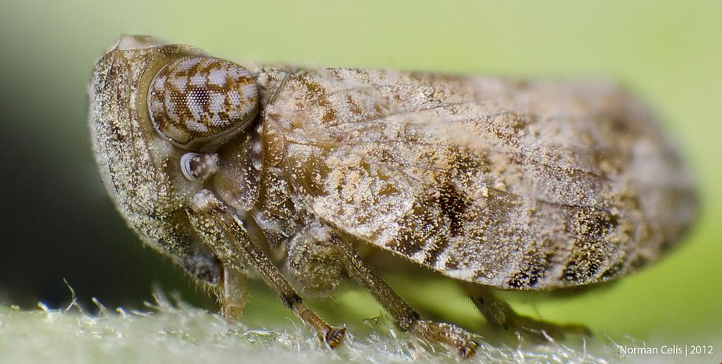 Tree Hopper by Norman in Member Albums