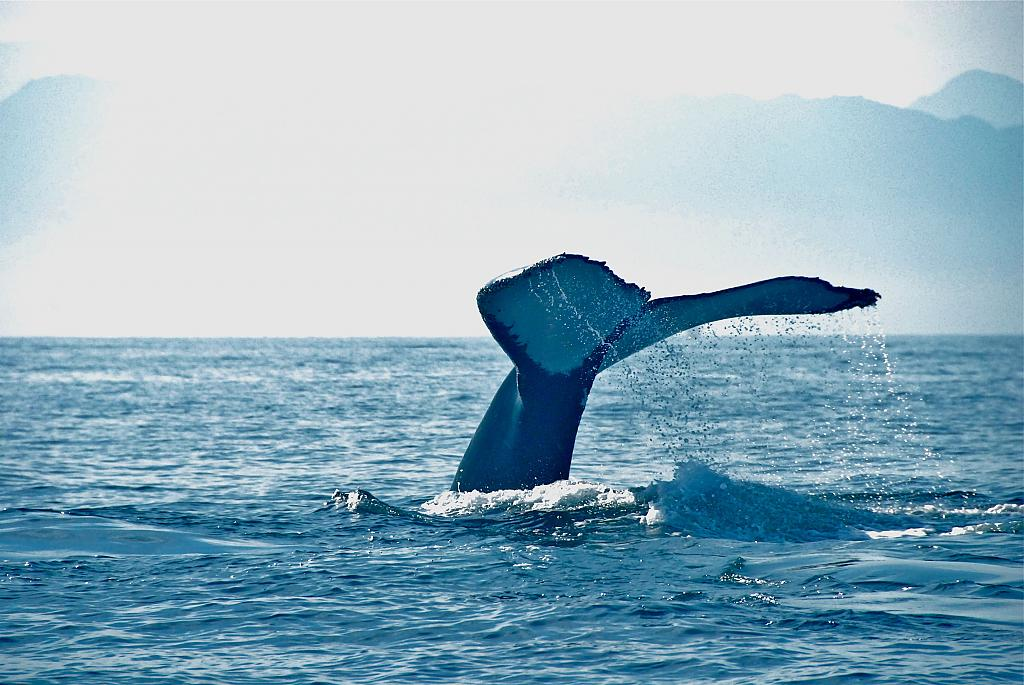 Whale of a time! by skooter1 in Member Albums