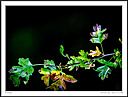 Contrasts of nature against various backgrounds. by Iansky in D500 Images