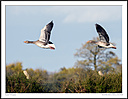 Slimbridge WWT by Iansky in D500 Images