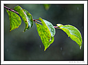 Wet leaves by Iansky in D500 Images