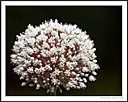 Spike by Iansky in D500 Images