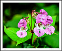 Nature with fill flash by Iansky in D500 Images