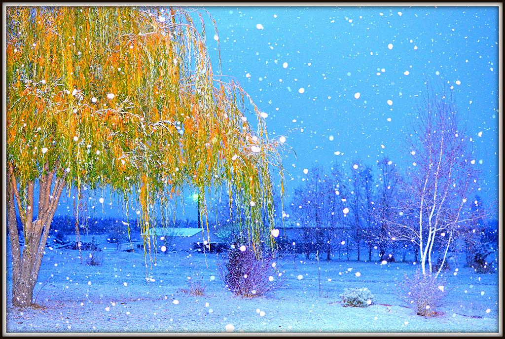 WHIFF OF WINTER by nikonpup in Member Albums
