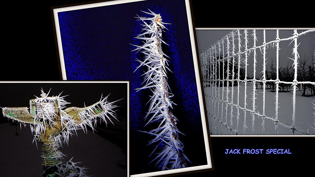 JACK FROST TRIPTYCH by nikonpup in Member Albums