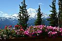 Mt. Rainier by nikonpup in Member Albums