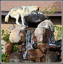 WOLF DEN by nikonpup in Member Albums