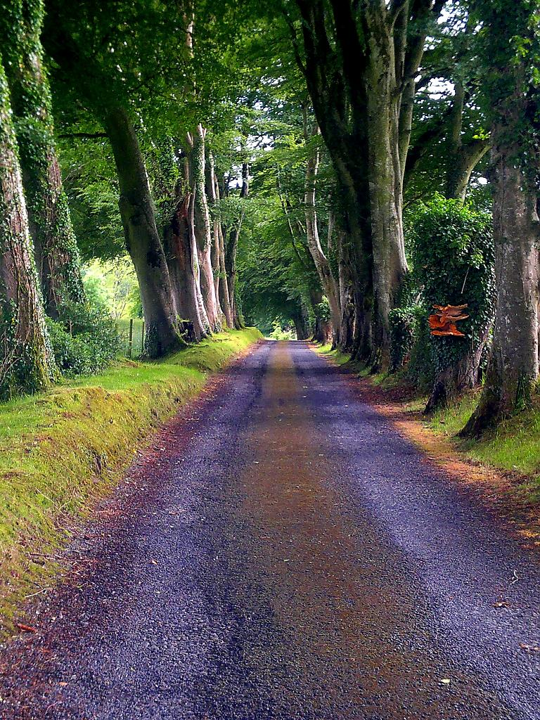 Country Road by AntrimHills in Member Albums