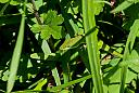 Green Anole by N_Addy in Member Albums
